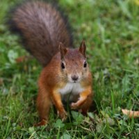 фотомодель :: Julilus Anybody