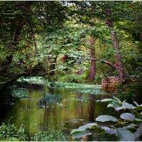 Лес,Набрань :: Виктория Иманова