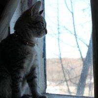 Что же там за окном? :: Тамара Холмогорова