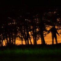 маньяк в лесной полосе :: Сергей Могильдя