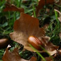 зарисовка :: Julilus Anybody