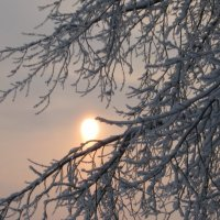 Зимнее солнце :: Ирина Березкина