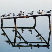 Птичьи посиделки :: Владимир Новиков