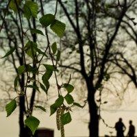 Весна :: Ирина Сесина
