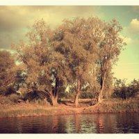 Перед грозой. :: О. Ф.