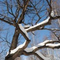 Зима :: Екатерина Кроз