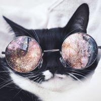 космо-кот :: Анна Суркова