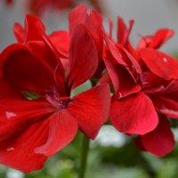 Flower :: Eugene Ger