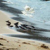 Птички :: сАха Везянк