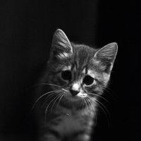 Из темноты :: Ирина Подсумкина