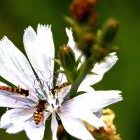 цветок :: Валерия Сереброва