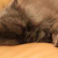 Кошка :: Andreas Kosenko