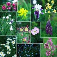 цветы :: Тино Вайнамойнен