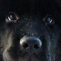 эти глаза напротив :: Vasiliy V. Rechevskiy