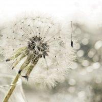 Белый дождливый день :: Екатерина Елизарова