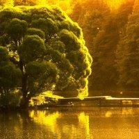 Двое и Дерево :: Sergey Leonidchenko