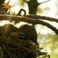 Птенцы, Спокойной ночи :: Алёна Дягелева