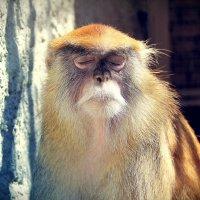 В зоопарке :: Рустам Ромуальдо
