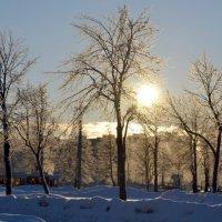 Зимнее утро :: Светлана Лебедева