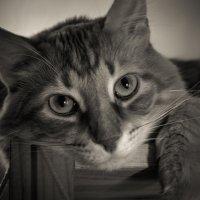 cat :: Олег Ионичев