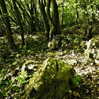 лес :: oleg trigubov