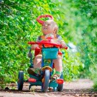ехали медведи на велосипеде... :: Мария Сафронова