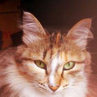 Кошка :: BeGiNnEr CaMeRiSsSt