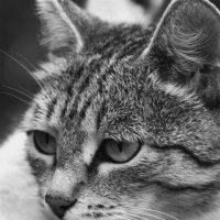 Кошка :: Полина Рябова