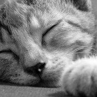кошка Оля :: Елена Липская
