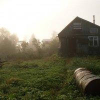 туман :: Ирина Ильина