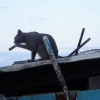 Кошка курит...) :: Альбина Хамидова