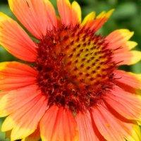 Солнечный цветок :: Натали V