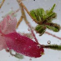 water :: Маргит Фосфат