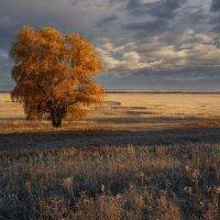 Поздняя осень :: Денис Богомолов
