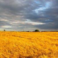 Белоруссия :: Александр Аль-А