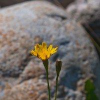 Луговые цветы :: Анна Добрина