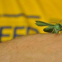 Барселонская бабочка :: Юлия Годовникова