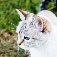 Кошка :: Александра Молодовская