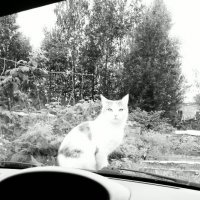 Кошка :: Анна Мичкова