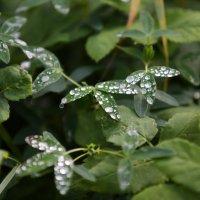 после дождя :: юрий макаров