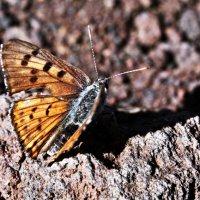 volcanic butterfly :: Анастасия Трубенкова