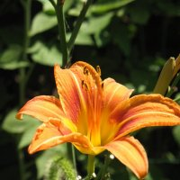 Цветок :: Мария Родина