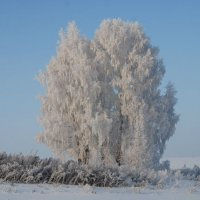 в серебре :: andrey shatokhin