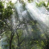 дым в лесу :: Ольга Рыбакова