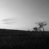 один в поле не воин :: Анастасия Басова