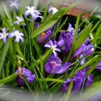 В саду :: Anna Kashkovskaya