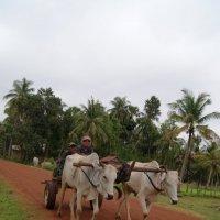 Деревенская жизнь Камбоджи. :: Лариса Борисова