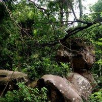 В джунглях Камбоджи. :: Лариса Борисова
