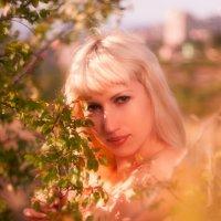Где-то в садах :: Николай Киселев