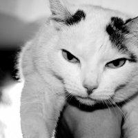 кошка :: Павел Мисько